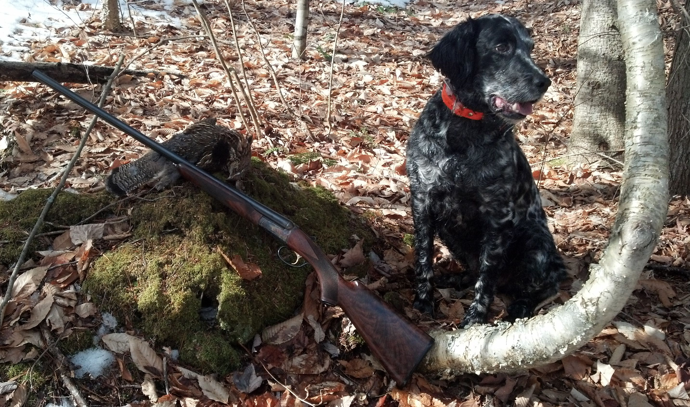 Bird, Dog & Shotgun........Doesn't get much better!